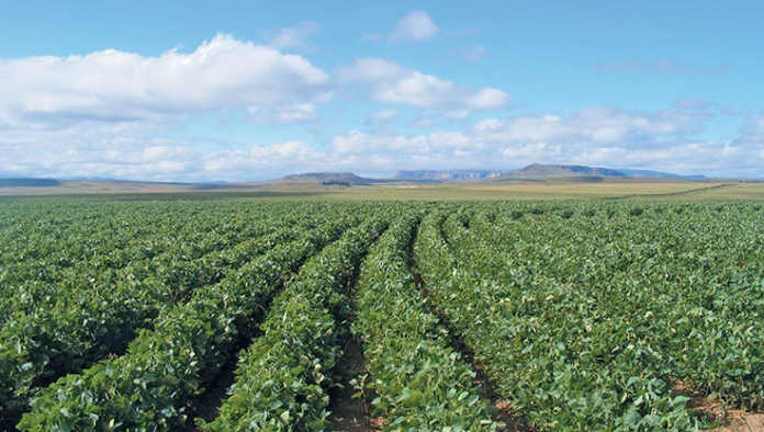 Co-op's overarching aim is 100% physically certified soy across its supply chain by 2025