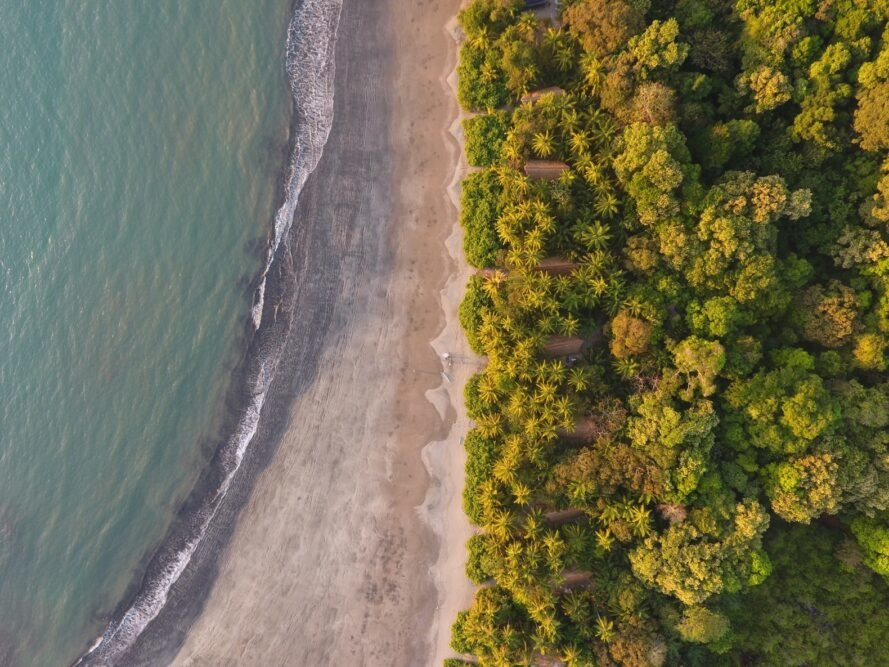 aerial view of forest and beach in Panama